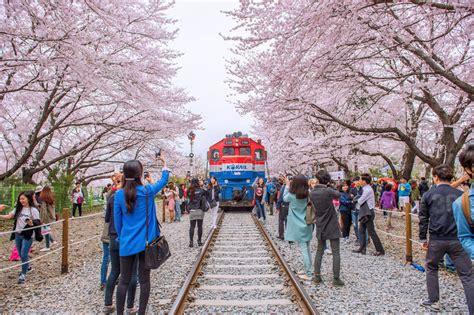 trik wisata korea murah ala flashpacker paket  korea