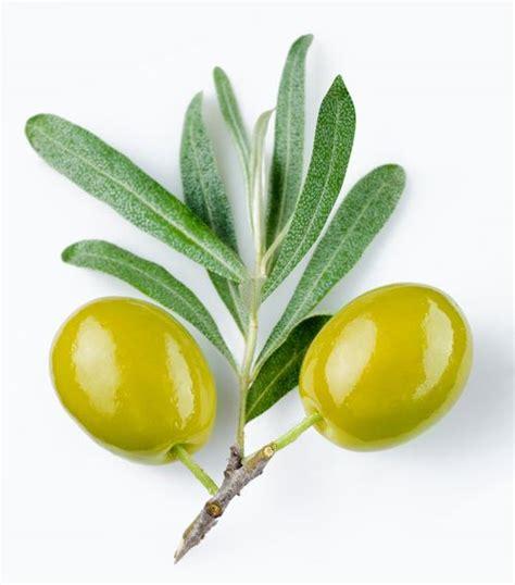 Minyak Zaitun Olio Dioliva olio oliva ok da bruxelles alla nuova etichetta agricoltura news