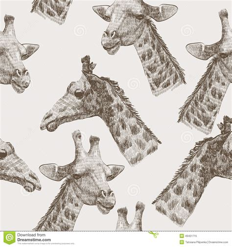 pattern giraffe drawing giraffe stock vector image 49451715