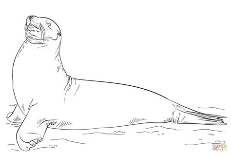 sea lion coloring pages printable galapagos sea lion posing coloring page free printable