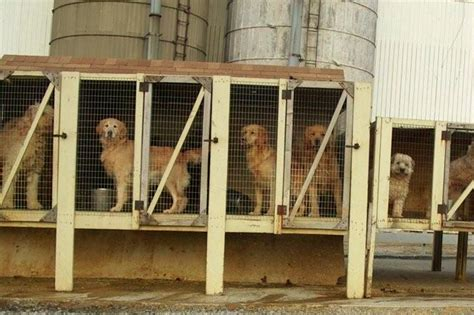 are puppy mills help on puppy mills spot speaks