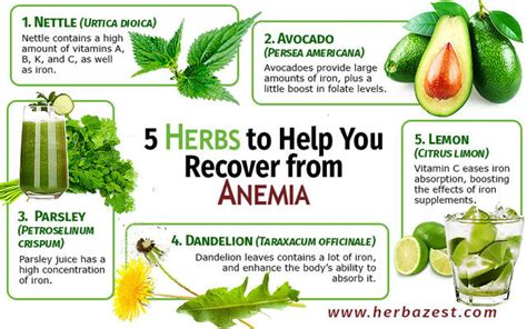 7 Ways To Prevent Anemia by 5 Herbs To Help You Recover From Anemia Anemia Symptoms