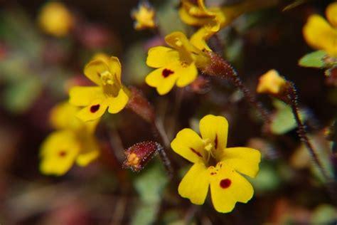 effetti fiori di bach rock propriet 224 per bambini naturopataonline