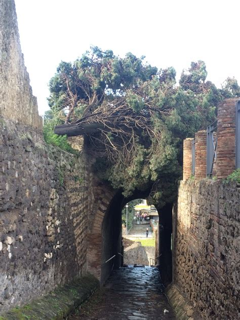 ingresso scavi di pompei bufera di vento a pompei un albero si abbatte sull