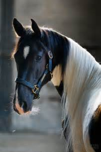 Mustang Horse Black Best 25 Horses Ideas On Pinterest Pretty Horses Horse And Pretty Animals