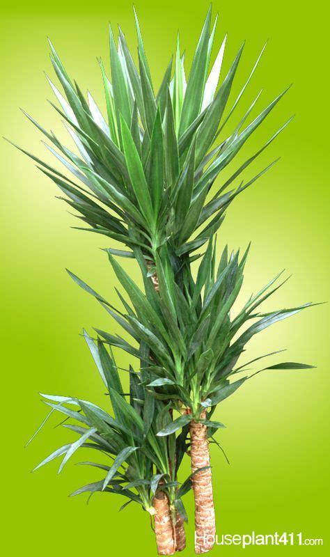 house plants that require little light water ehow uk easy care houseplants on pinterest houseplants desert