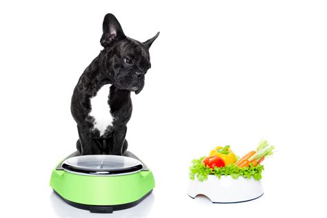 weight management for pets weight management for the overweight and obese pet activphy