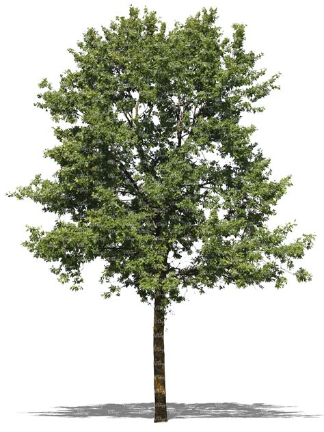 How To Make A Pine Tree Out Of Paper - cut out deciduous tree cut out trees and plants vishopper
