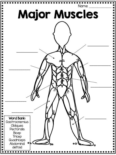 muscular system activities - Google Search | Muscular