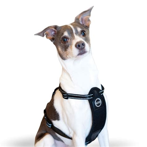 most comfortable safety harness buy pet cat harnesses online cat leashes shechosethecat