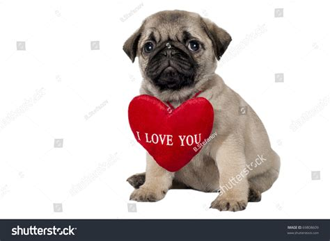 pug says i you i you pug gallery