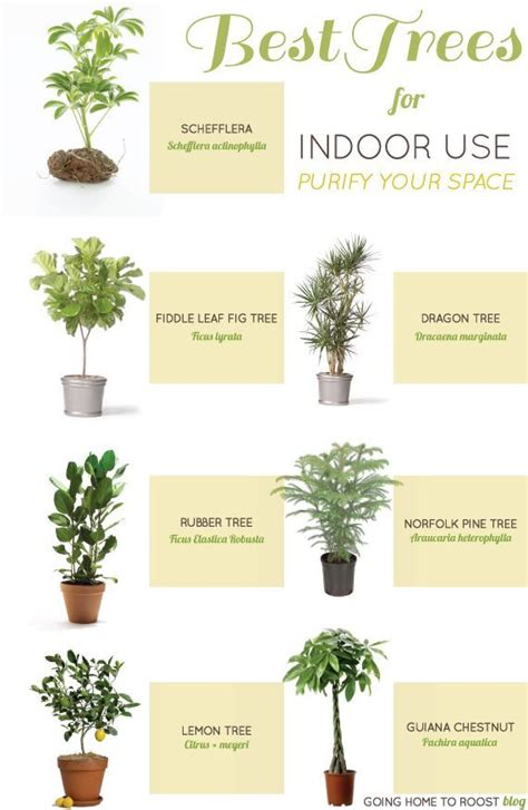 Which Plant Is Used To Make Paper - best 25 indoor trees ideas on indoor tree