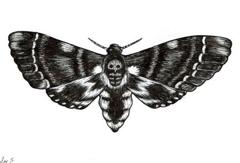 deathhead moth tattoo inspiration pinterest moth