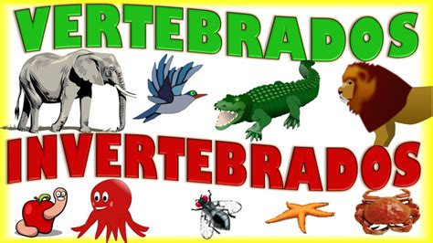 imagenes de animales vertebrados e invertebrados animales vertebrados e invertebrados para ni 241 os