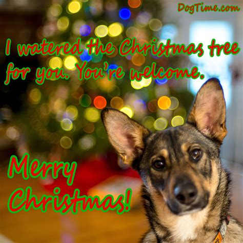 can you ship puppies 30 cards you can with your friends and family dogtime