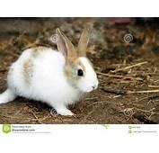 Bunny Rabbit Royalty Free Stock Photos  Image 20814898