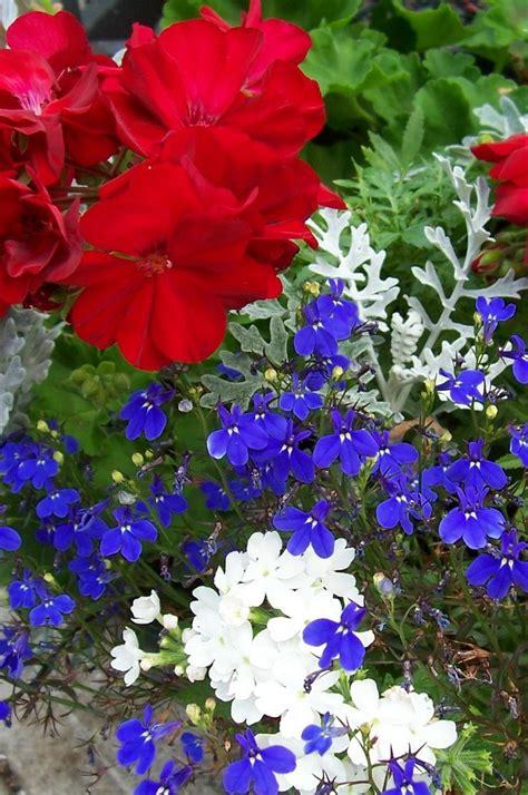 139 Best Red White Blue Flowers Images On Pinterest Blue Flower Garden