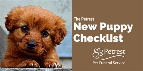 new puppy tips new puppy checklist tips for owning dogs