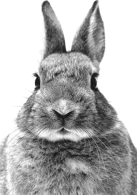 black and white rabbit wallpaper pin by tiffany s secret on furry friends pinterest