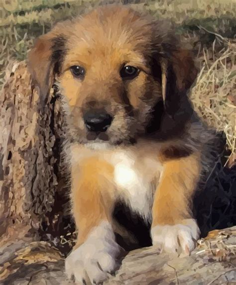 crossbreed dogs is a crossbreed right for you infolific