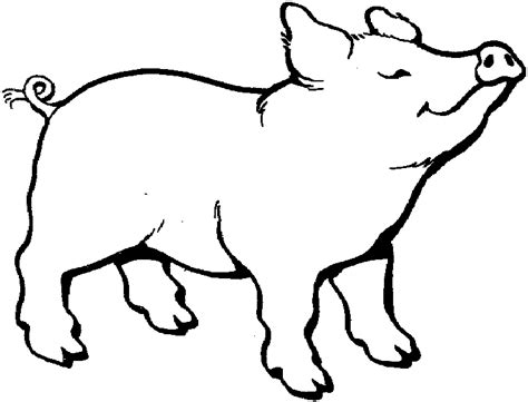 Outline Of A Pig Clipart Best The Pig Coloring Pages