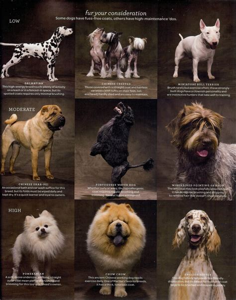 dog grooming grooming different dog breeds 94 best images about xp dogs on pinterest dog agility