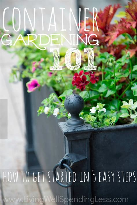 container vegetable gardening tips container gardening 101 container gardening container