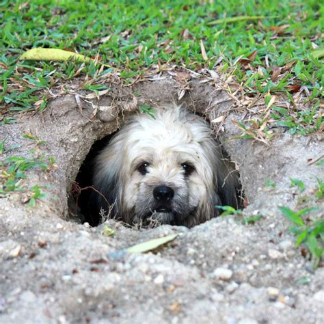 underground dog houses underground dog house pictures to pin on pinterest pinsdaddy