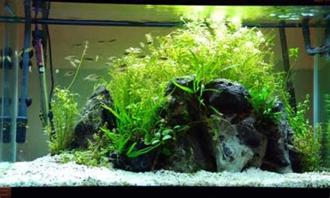 Aquascaping Materials by Guide To Aquascape For Beginners Aquascaper