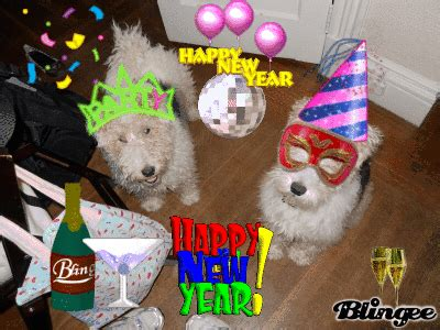 wallpaper gif happy new year 2016 funny happy new year animals wallpapers hd 2016 2017