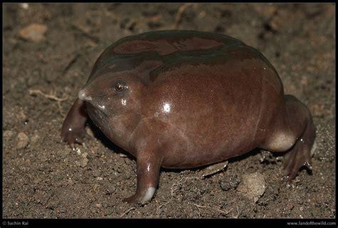 imagenes de animales feos del mundo los animales m 225 s feos del mundo fotogaler 237 a ciencia y