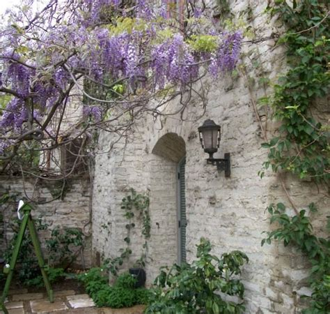 training wisteria vines to wall 43 best the fence along the lane images on pinterest