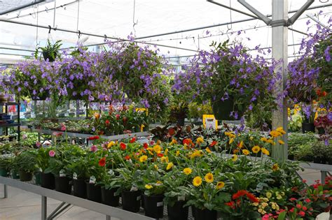 landscaping stores near me plants near me 100 plants store live indoor plan darxxidecom garden