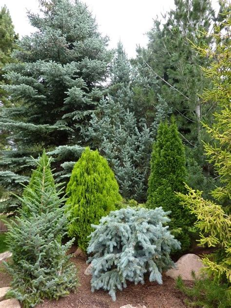 Evergreen Landscaping Ideas Evergreen Landscaping Ideas Eternal Oases Houz Buzz