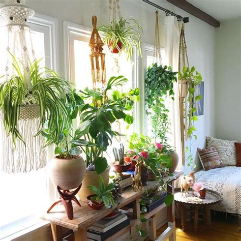 Best House Plants For Window 25 Best Ideas About Window Plants On Hanging