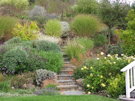 ornamental grasses mediterranean landscape san francisco by derviss design