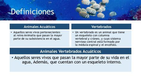 imagenes de animales invertebrados acuaticos animales vertebrados acuaticos