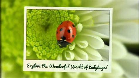 Ladybug World Ladybug World Ladybug Books On