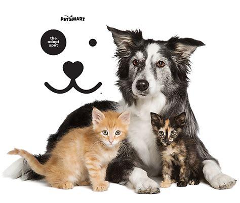 pet supplies accessories  products  petsmart