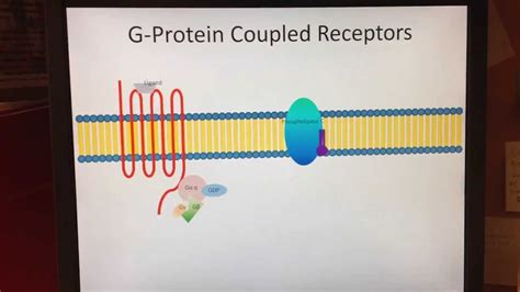 g protein coupled receptors animation g protein coupled receptor g alpha q