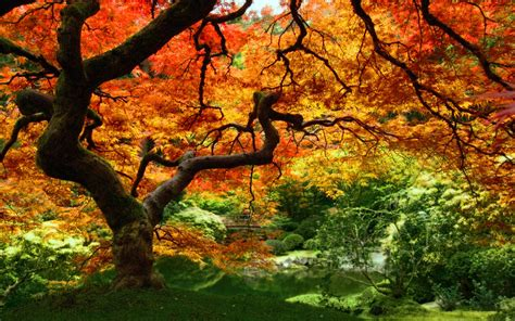 fall trees wallpaper 989101