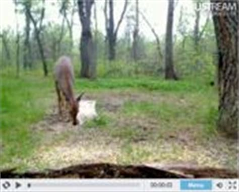 live wildlife camera on ustream using cctv camera