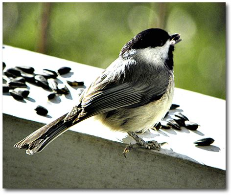 a breath of fresh air birds of a feather