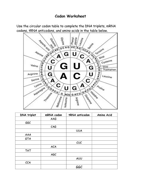 Codon Worksheet by 16 Best Images Of Amino Acid Codon Worksheet Answers