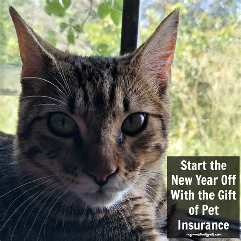 puppy health insurance start the new year with the gift of pet insurance pawsitively pets