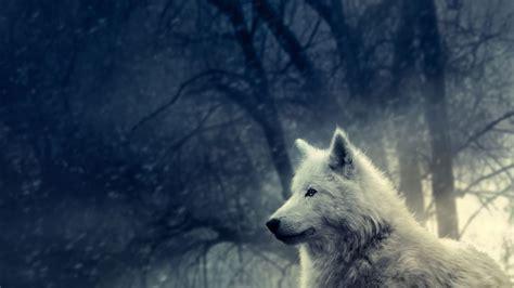fondos de pantalla de lobos en movimiento fondos de pantalla lobo blanco 1366x768 fondos de pantalla y wallpapers