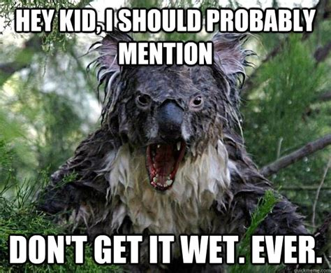 Wet Meme - pin wet koala bear kill it with fire wallpaper on pinterest