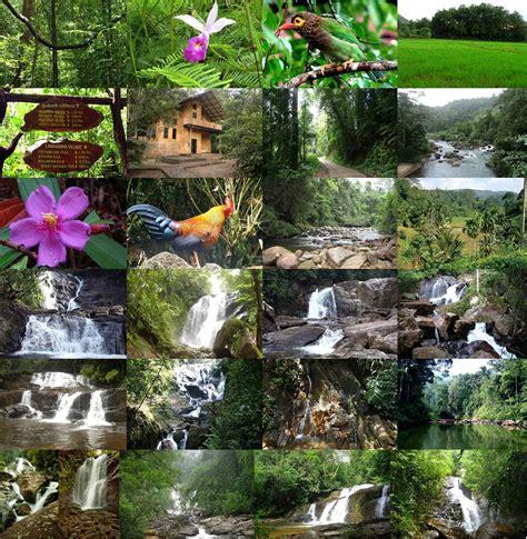 Sinharaja Rain Forest (Pitadeniya Wana Niwahana) « Weddingdata