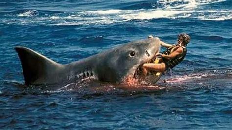 Pin El Ataque Del Tiburón De Dos Cabezas on Pinterest