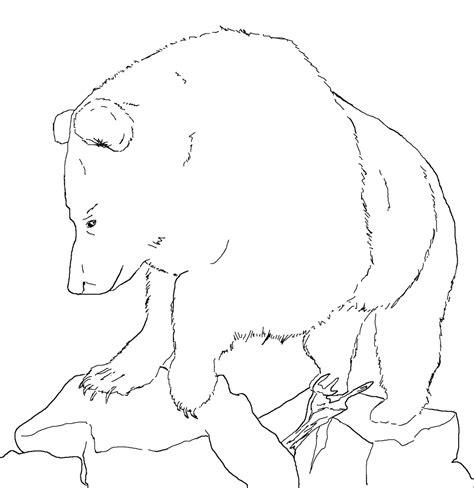 Grizzly Bear Coloring Page Grizzly Coloring Page